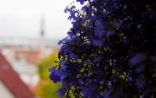 Таллин, Эстония | Самостоятельные путешествия ChanceToTrip.com