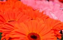 Цветочный рынок, Таллин, Эстония | Самостоятельные путешествия ChanceToTrip.com