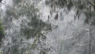 Таинственный лес или Ежики в тумане :-) Бали | Елена Ходосевич | Самостоятельные путешествия ChanceToTrip.com