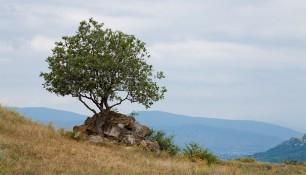 Близ Монастыря Джвари, Мцхета, Грузия | Vladimir Fil'varkiv