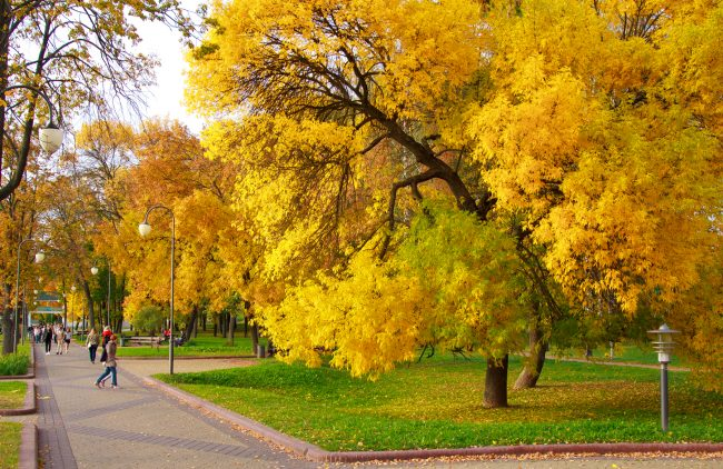Осень, Парк Победы, Минск | ChanceToTrip.com by Vladimir Filvarkiv