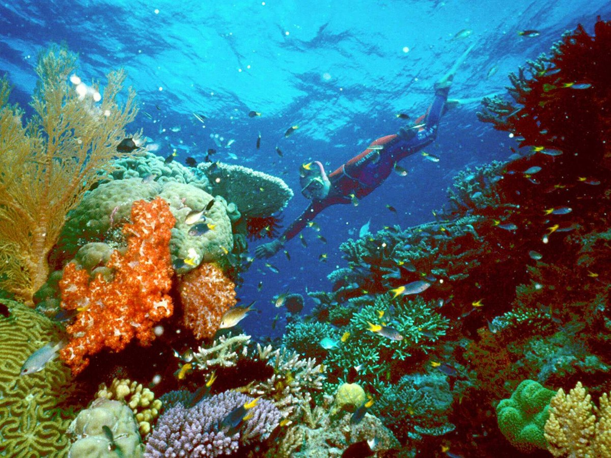dive-into-the-clear-blue-waters-of-australias-coral-sea-to-see-the-spectacular-great-barrier-reef