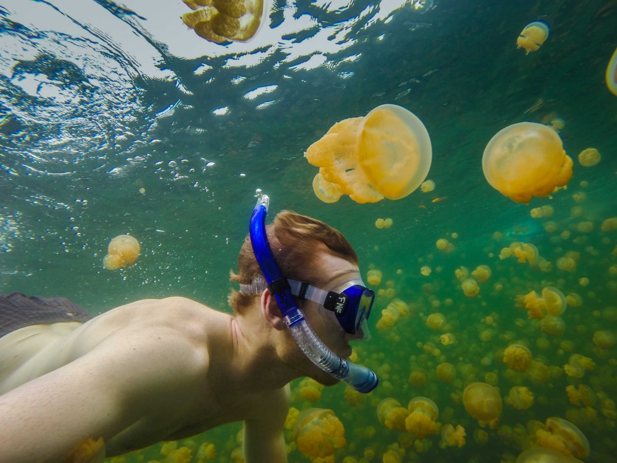 swim-with-thousands-of-jellyfish-at-jellyfish-lake-in-eil-malk-island-palau