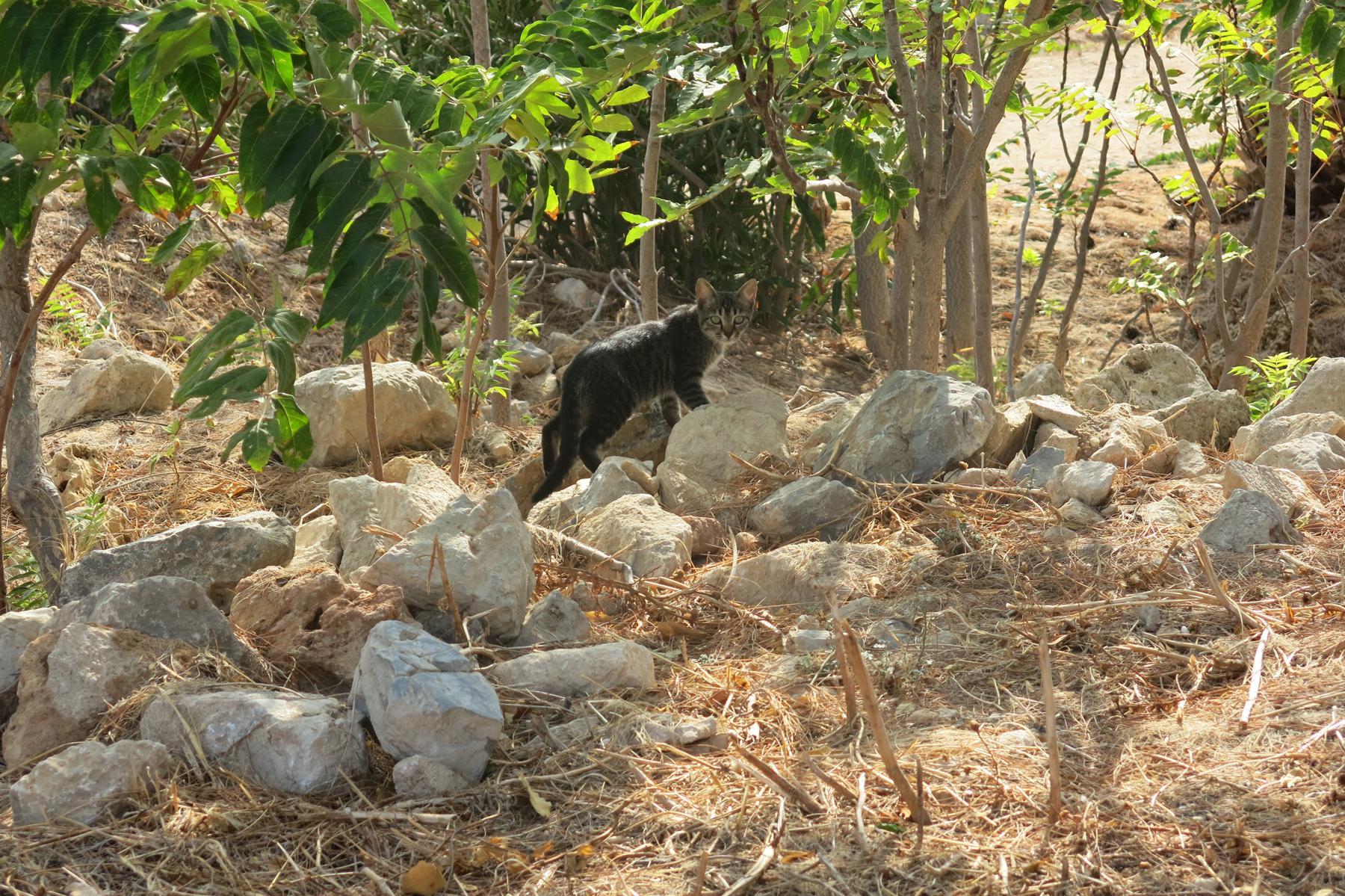 Кошка в крепости Ретимно, Бали, Крит, Греция | Елена Гежа