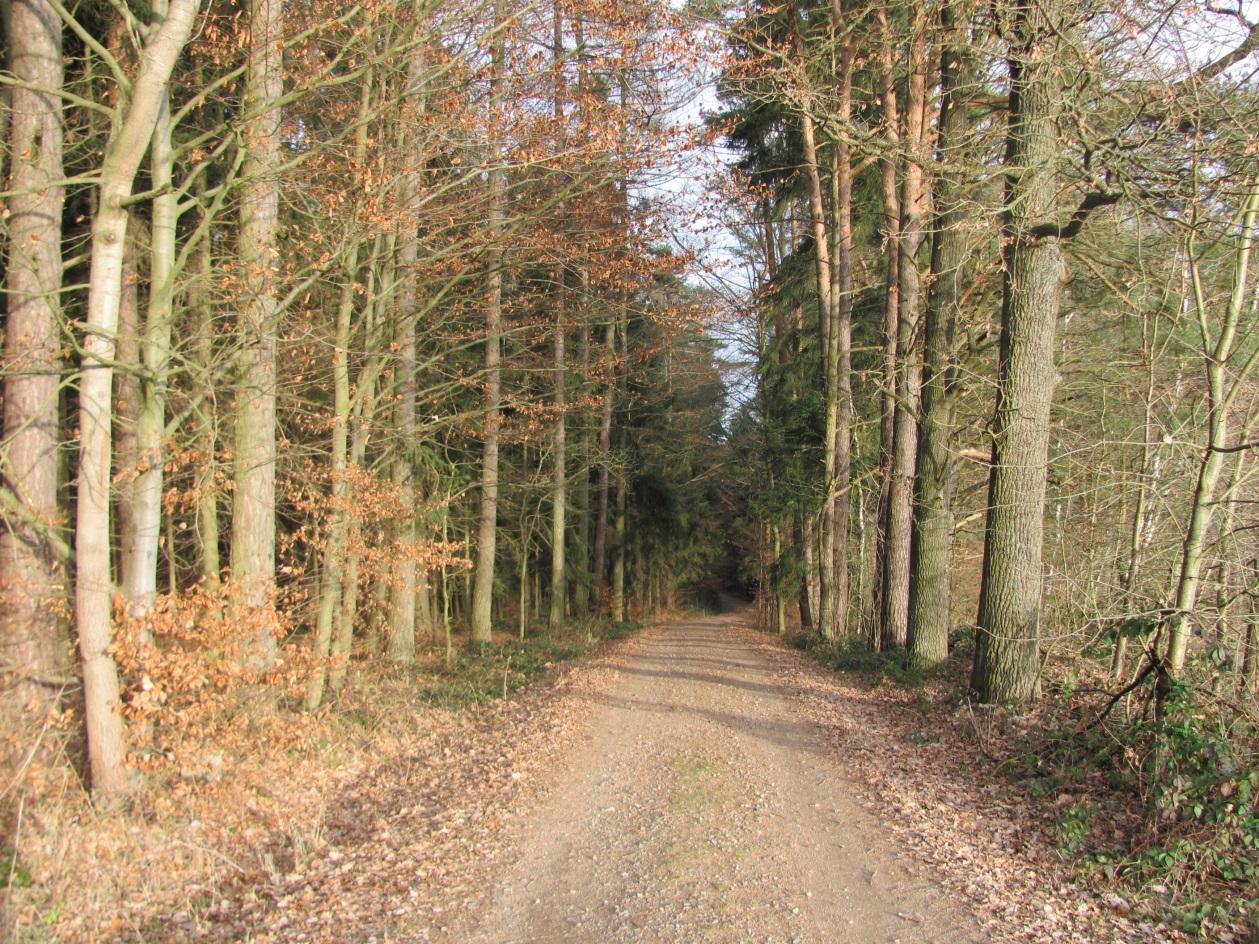 Дорога к Heilbrünnl